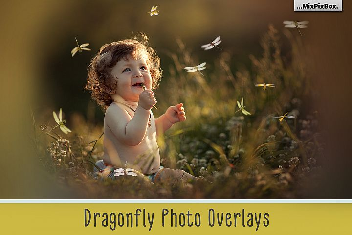 Dragonfly Photo Overlays