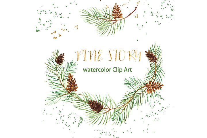Pine branches. Watercolour clipart