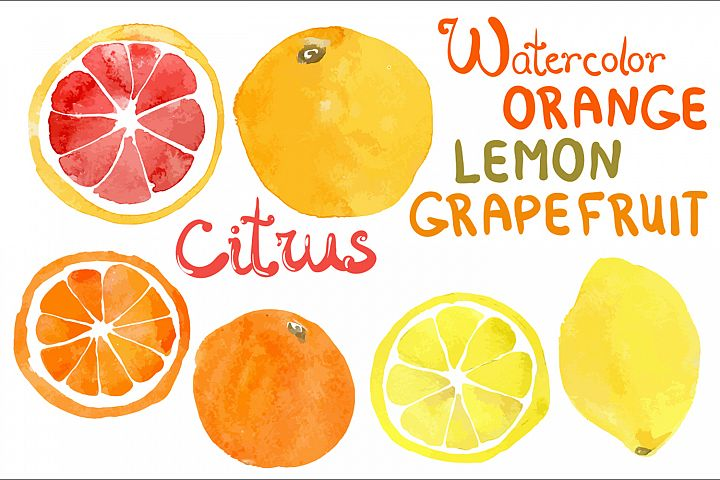 Watercolor vector citrus fruits