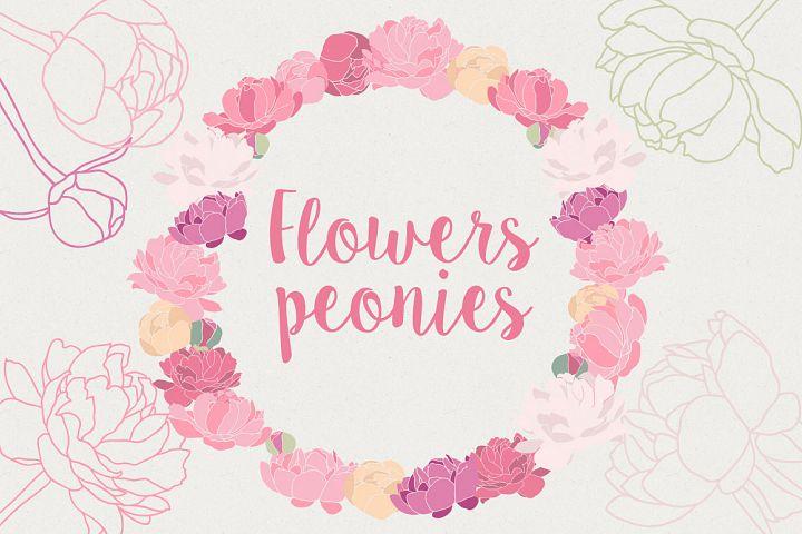 Flower Peonies