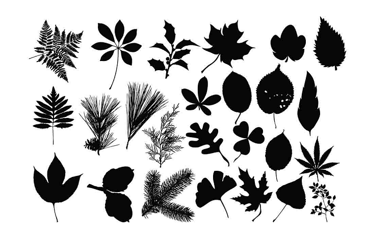Leaves silhouette SVG DXF EPS PNG AI