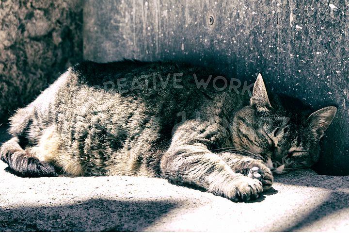 Cat Sleeping On The Floor