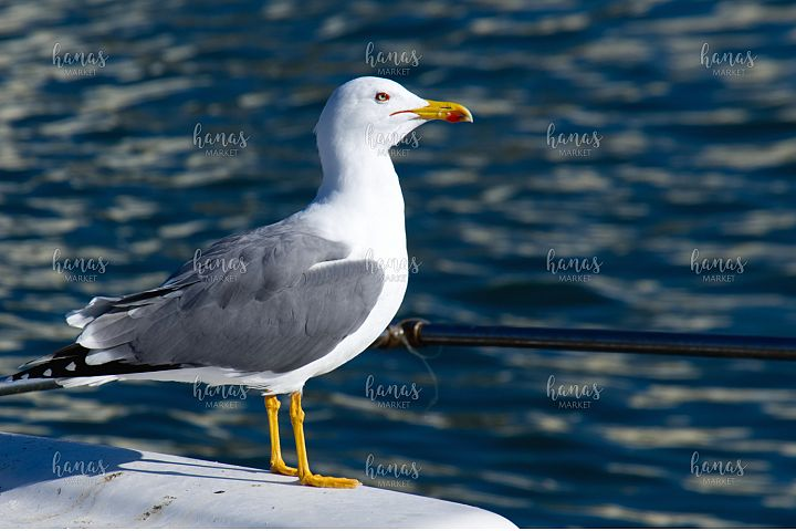 Seagull On Stern