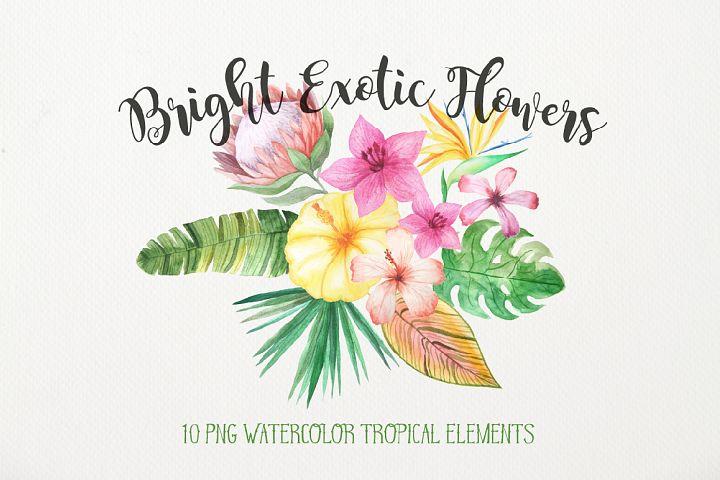 Watercolor Exotic Flowers Mini Set