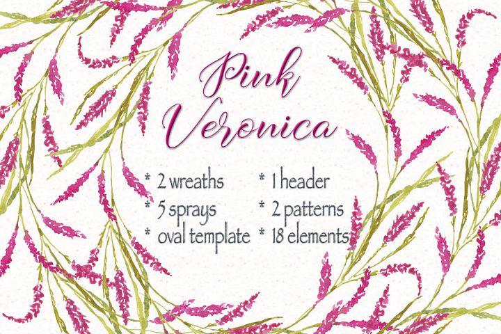 Watercolor clip art bundle of pink Veronica