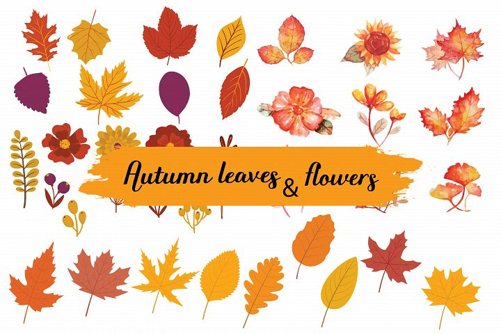 autumn leavs & floers,autumn leaves,autumn flowers,autumn elements,fall elements,fall,autumn,fall animals,autumn animals,autumn leaves,fall leaves