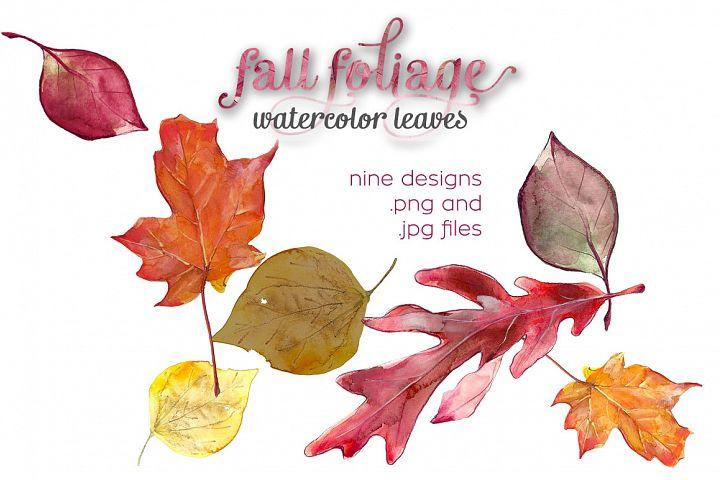 Fall Foliage Watercolor Illustrations