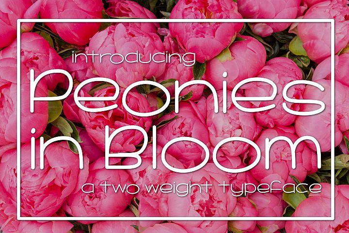 Peonies in Bloom