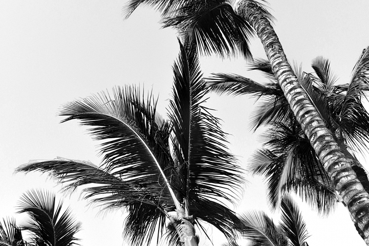 Palm trees in black and white